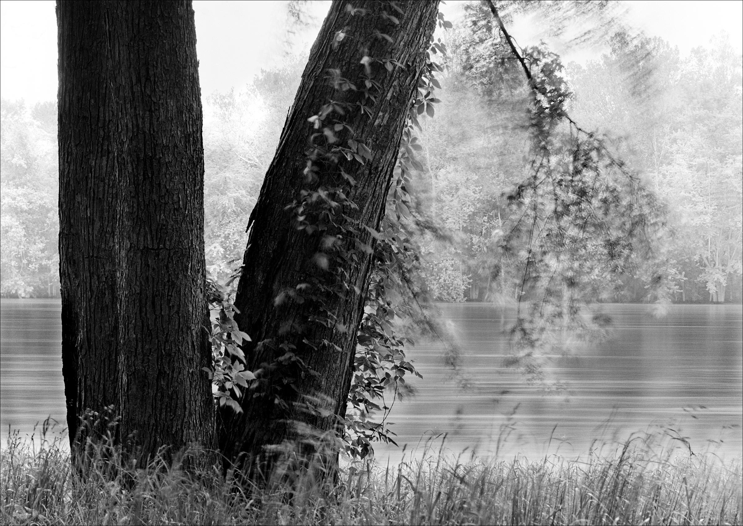 TreesAlongPotomac_BlackandWhite_Photography.jpg