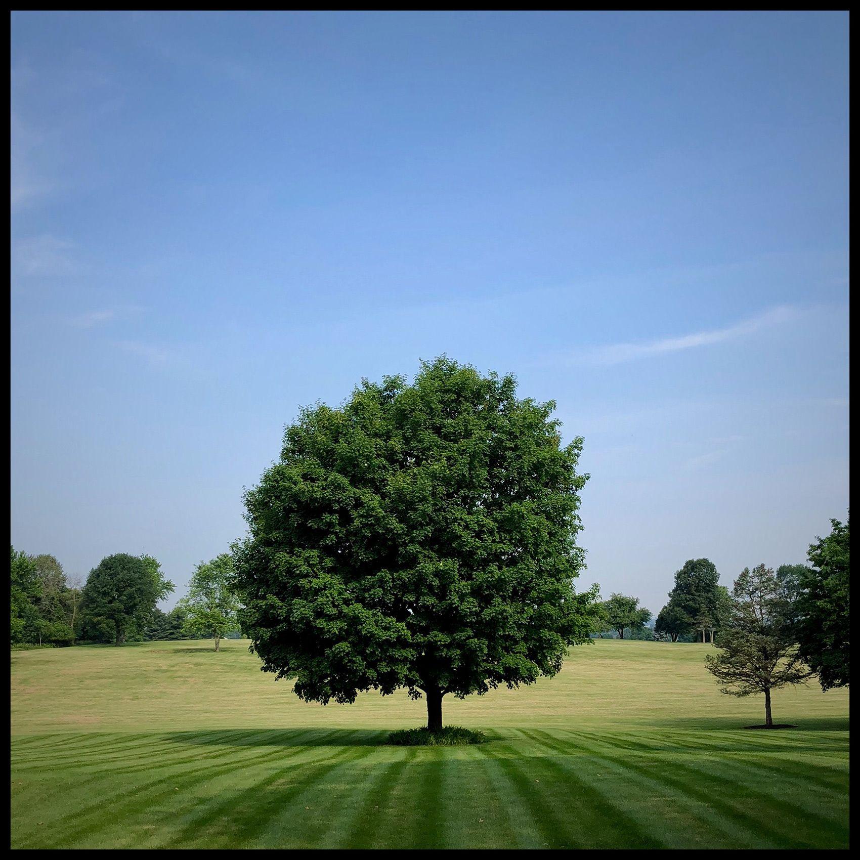 Pennsylvania_Tree.jpg