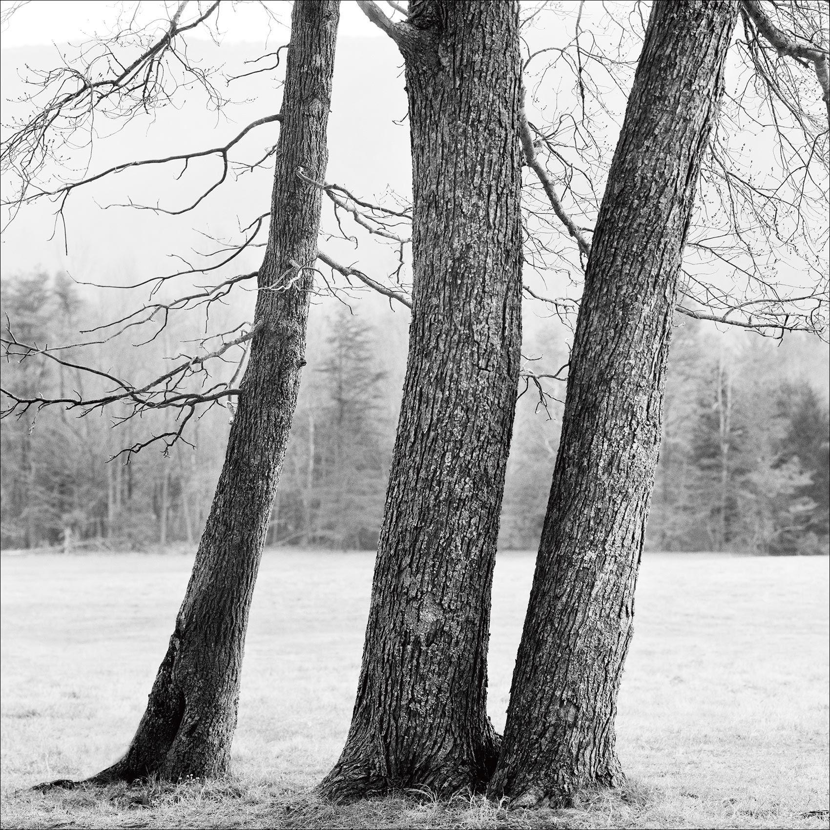 TrioofTrees_SmokyMountains_NationalPark_BlackandWhite_Photography.jpg