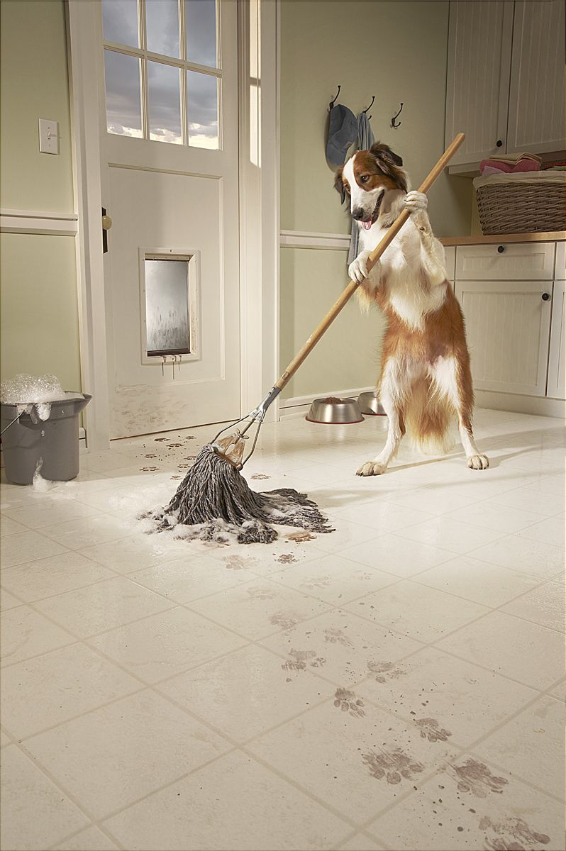 1dog_mopping_floor.jpg