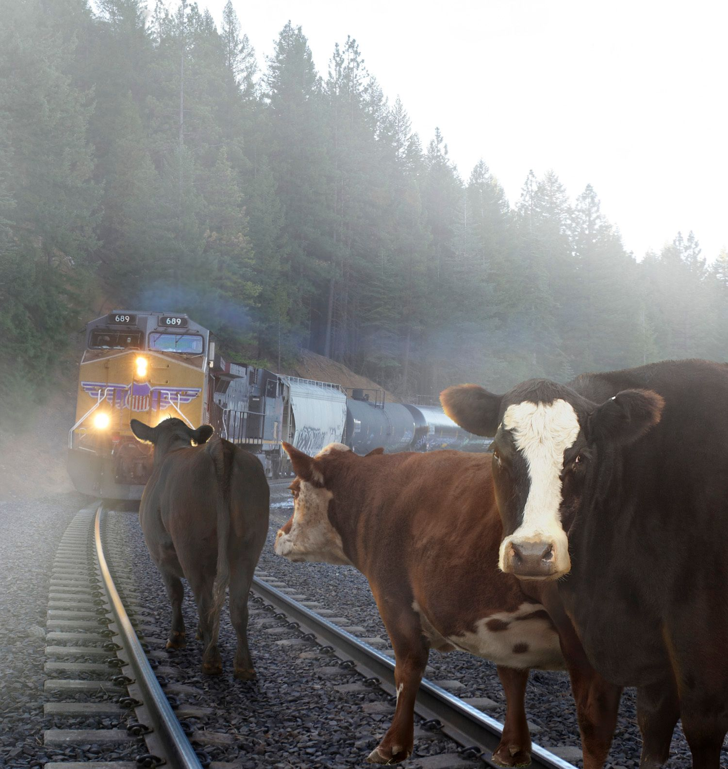 1cows_trains_no_car_blur.jpg