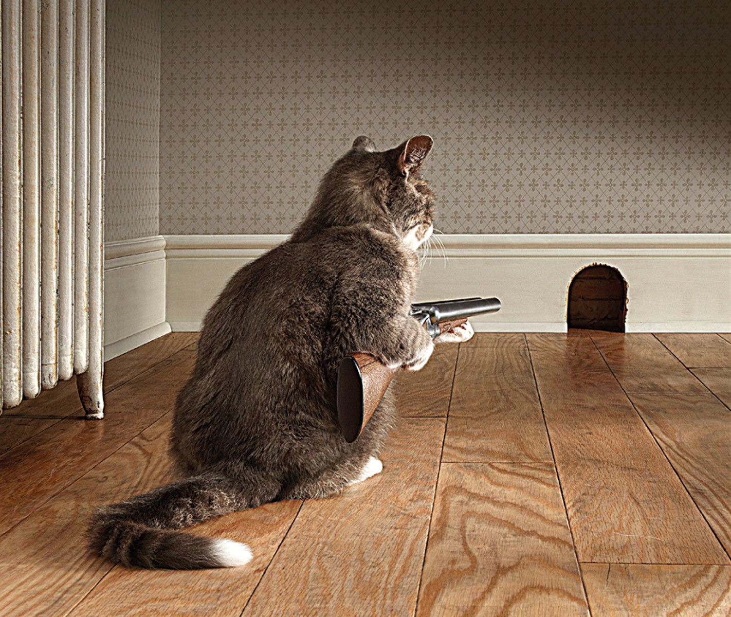 Cat with Shotgun - Syngenta