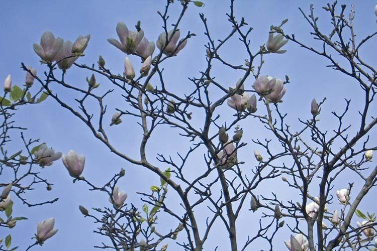 1NOLA_spring
