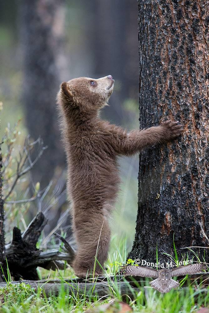 Black-bear06869D