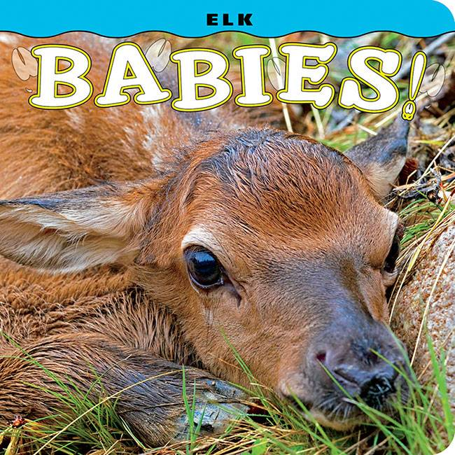 Elk Babies infant board book $8.95 + $3  S/H