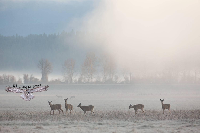 Whitetail-Deer52512D