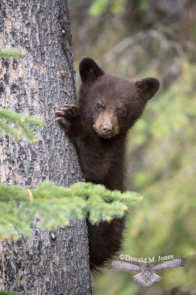 Black-Bear07689D