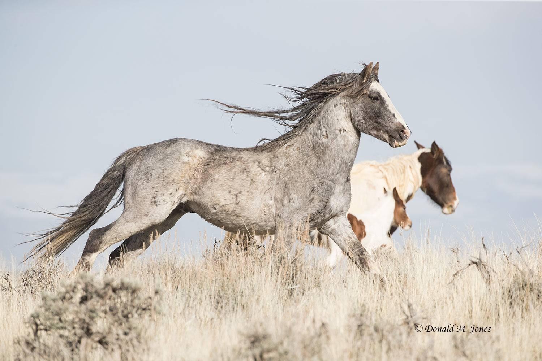 Wild-Horse1039D