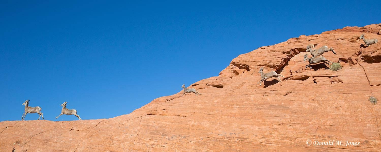 Desert-Bighorn-Sheep00401D