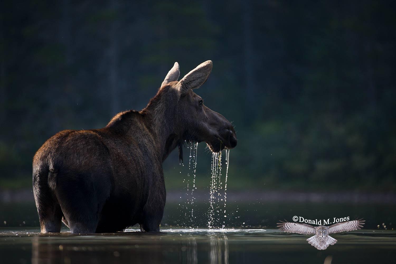 Moose05022D