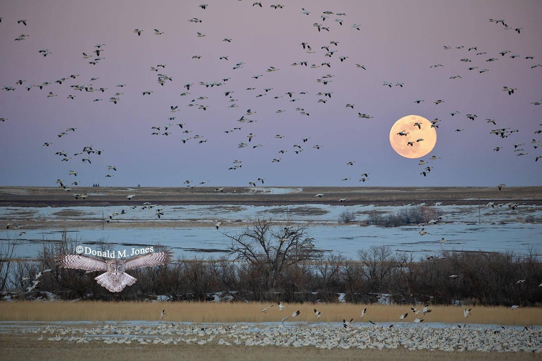 Snow-Goose2550D Spring Equinox full moon