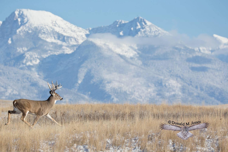 Whitetail-Deer49193D
