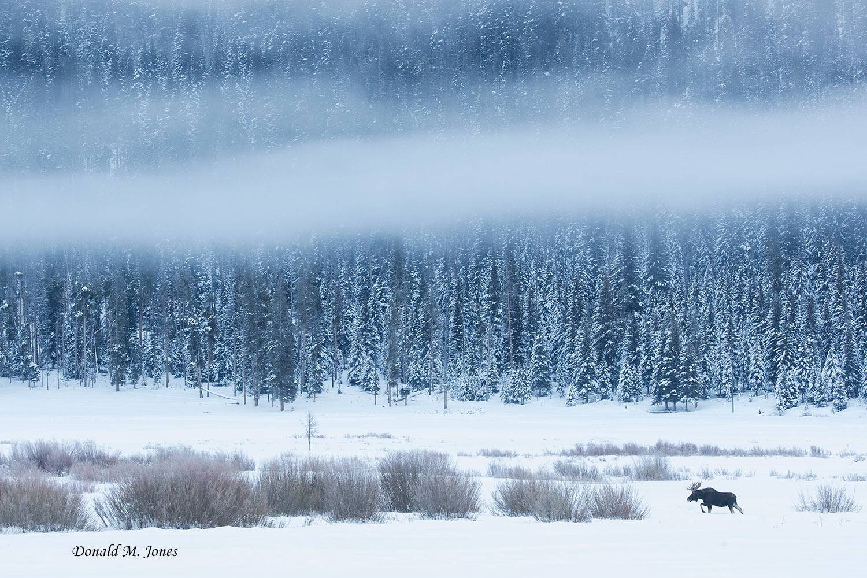 Moose06301D