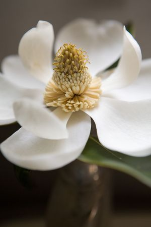 1gb_magnolia___resized