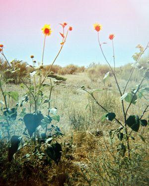 1yellowflowers___resized