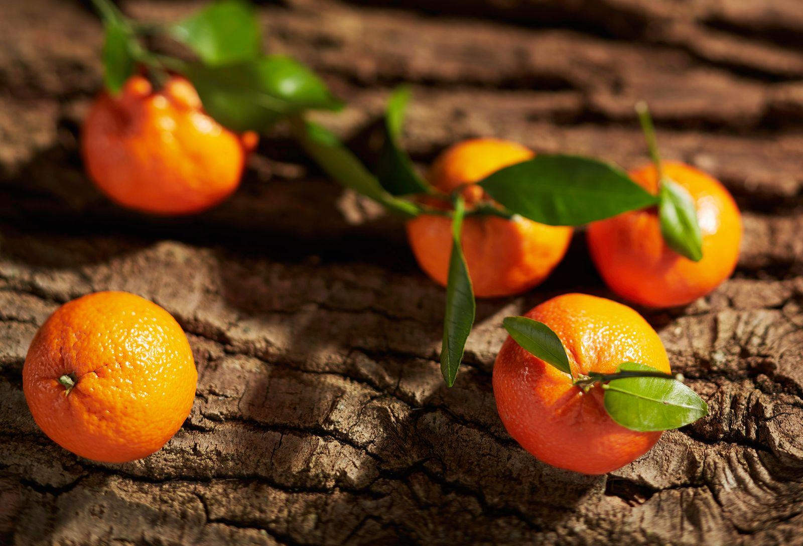Citrus_bark.jpg