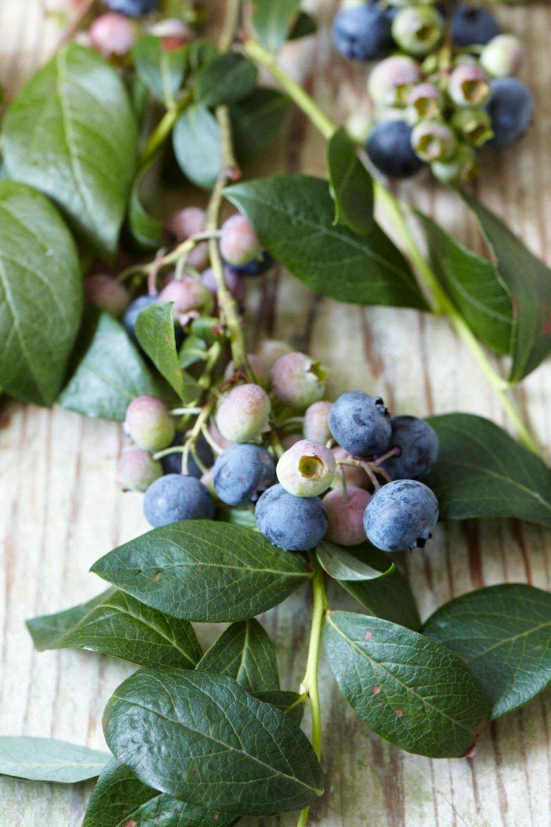 1s_blueberries_20120802_369_1.jpg