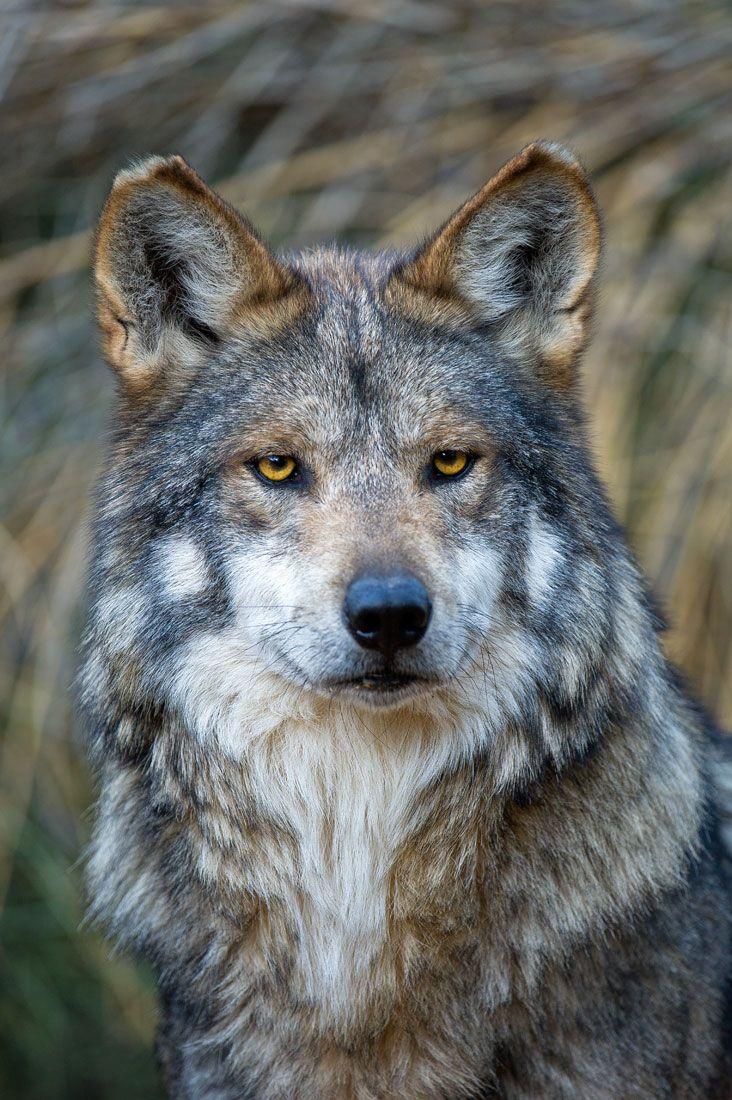 wildlife southwest 1