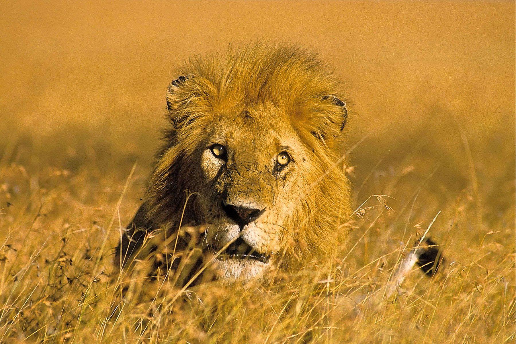 060614163514_10100_charging_lion_copy_cropped_1800x1200_web_600kb.jpg