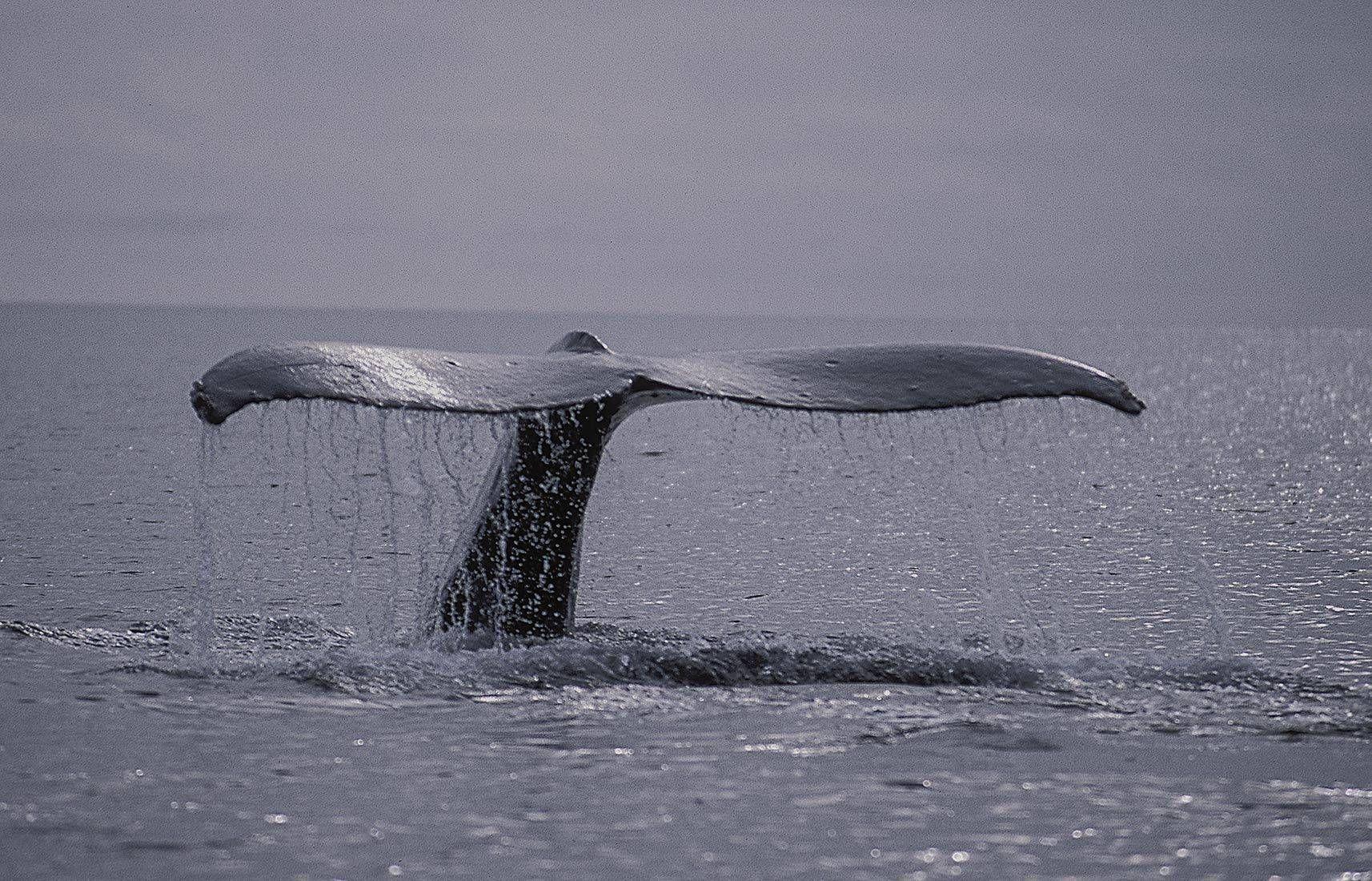 wildlife oceans