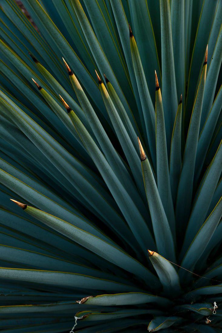 wildlife plants
