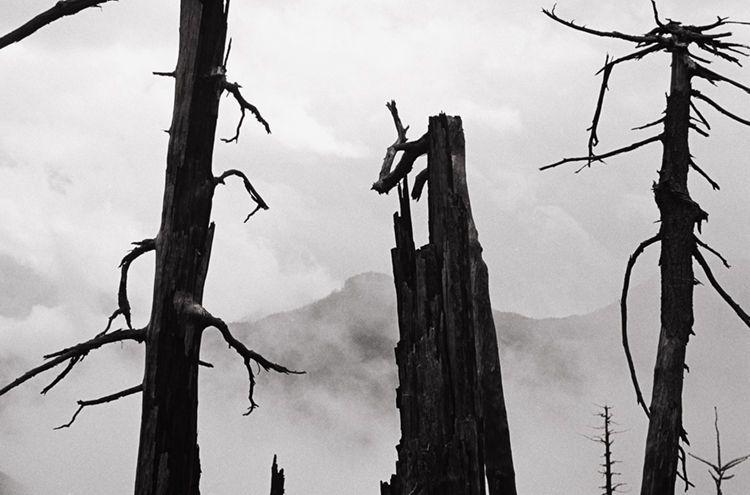 Mt. St. Helens   2003