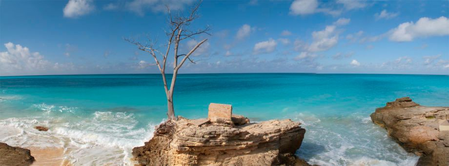 1lonely_tree_bimini_panoramic_72.jpg