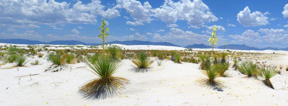 1white_sand_dune_panoramic_72.jpg