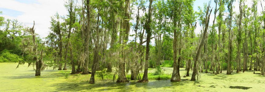 1low_country_swamp_72.jpg