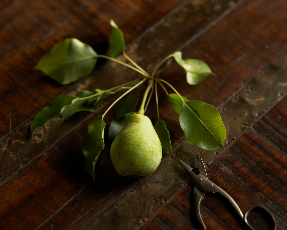 lisa bishop food stylist- pear