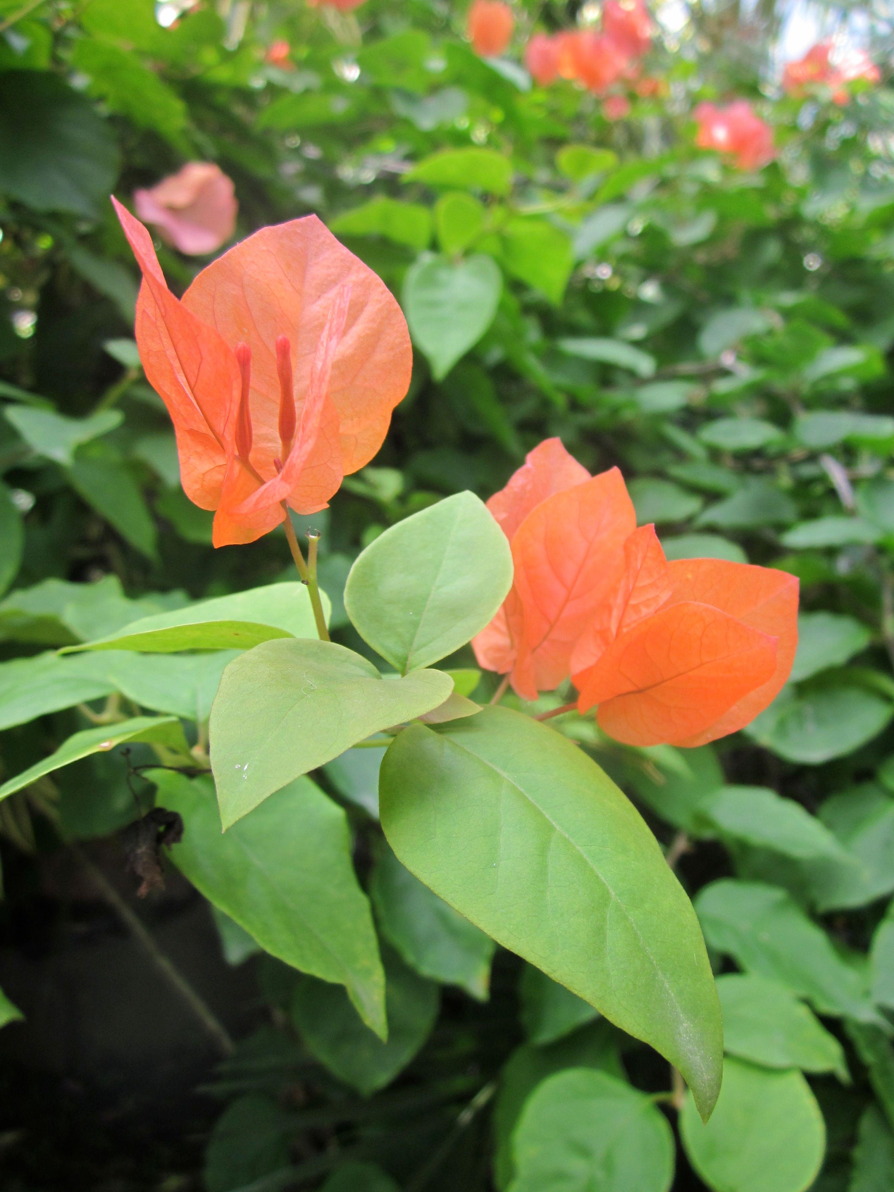 Costa Rica Flower.jpg