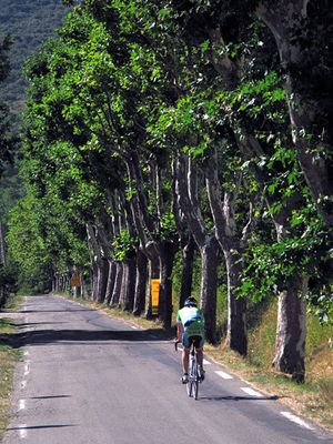 1fr_cyclist_provence