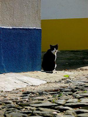 1port_cat