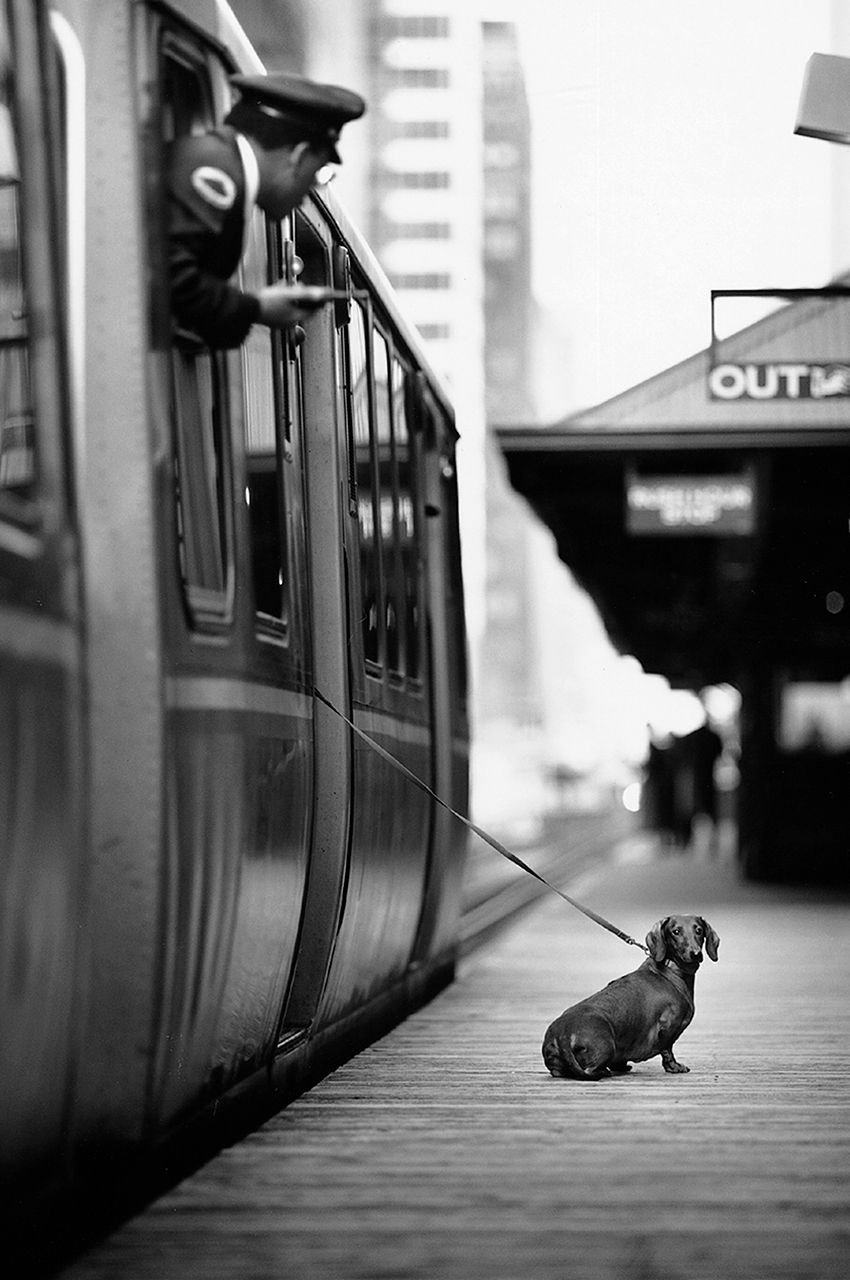 369-Dog-at-train-5.jpg