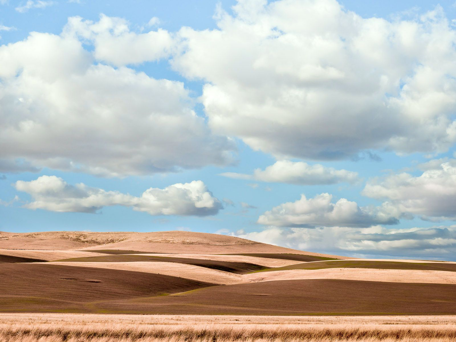 Springtime in the Palouse