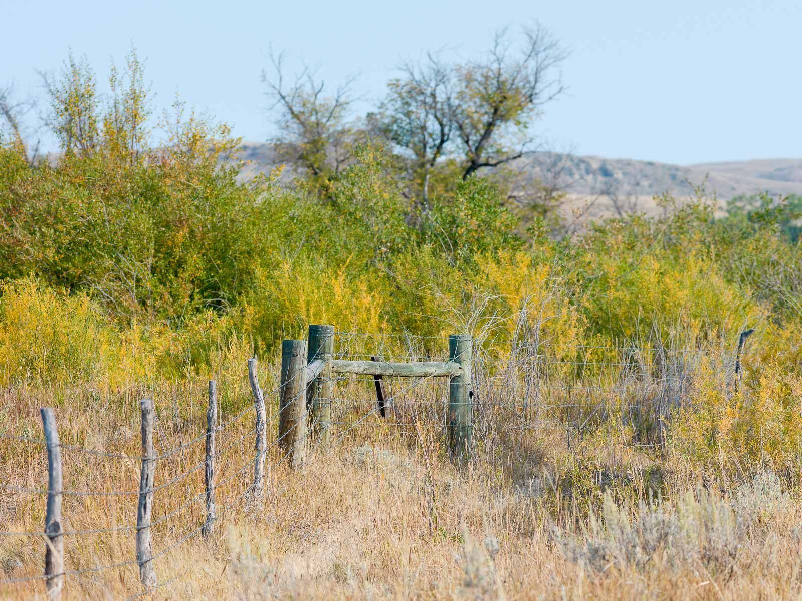Fences and Brush on a Wyoming Ranch