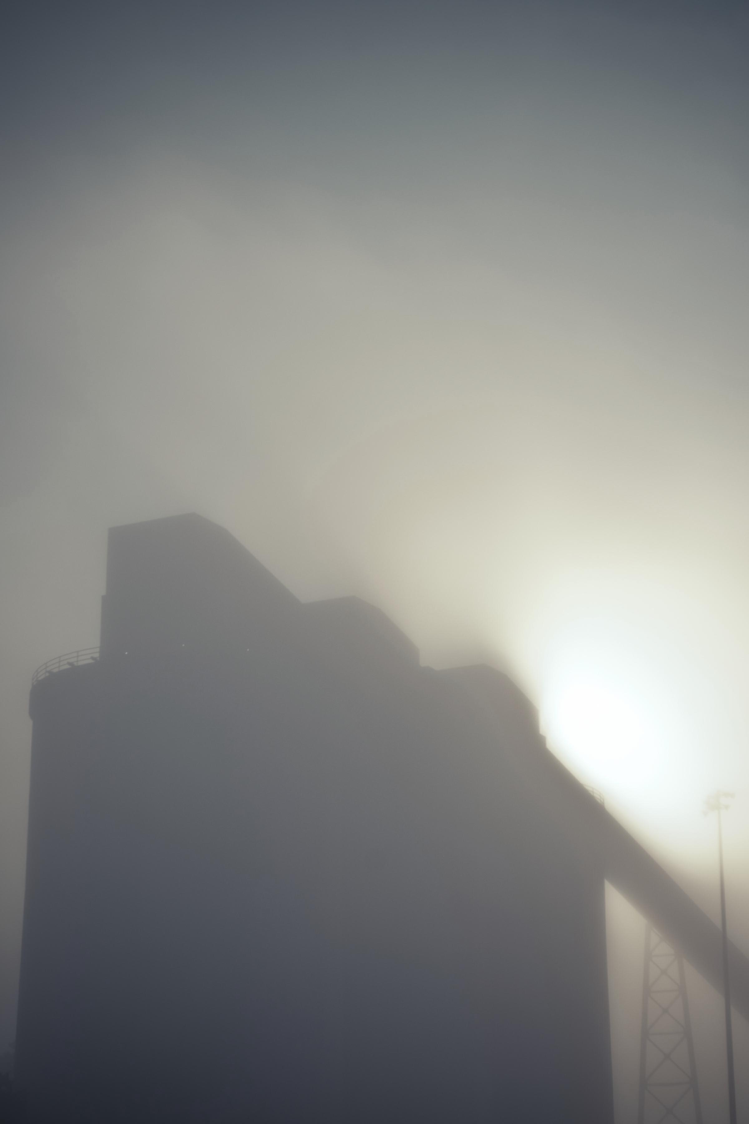 20100427_ucc_cumberland_plant_1_Alien_skin.jpg
