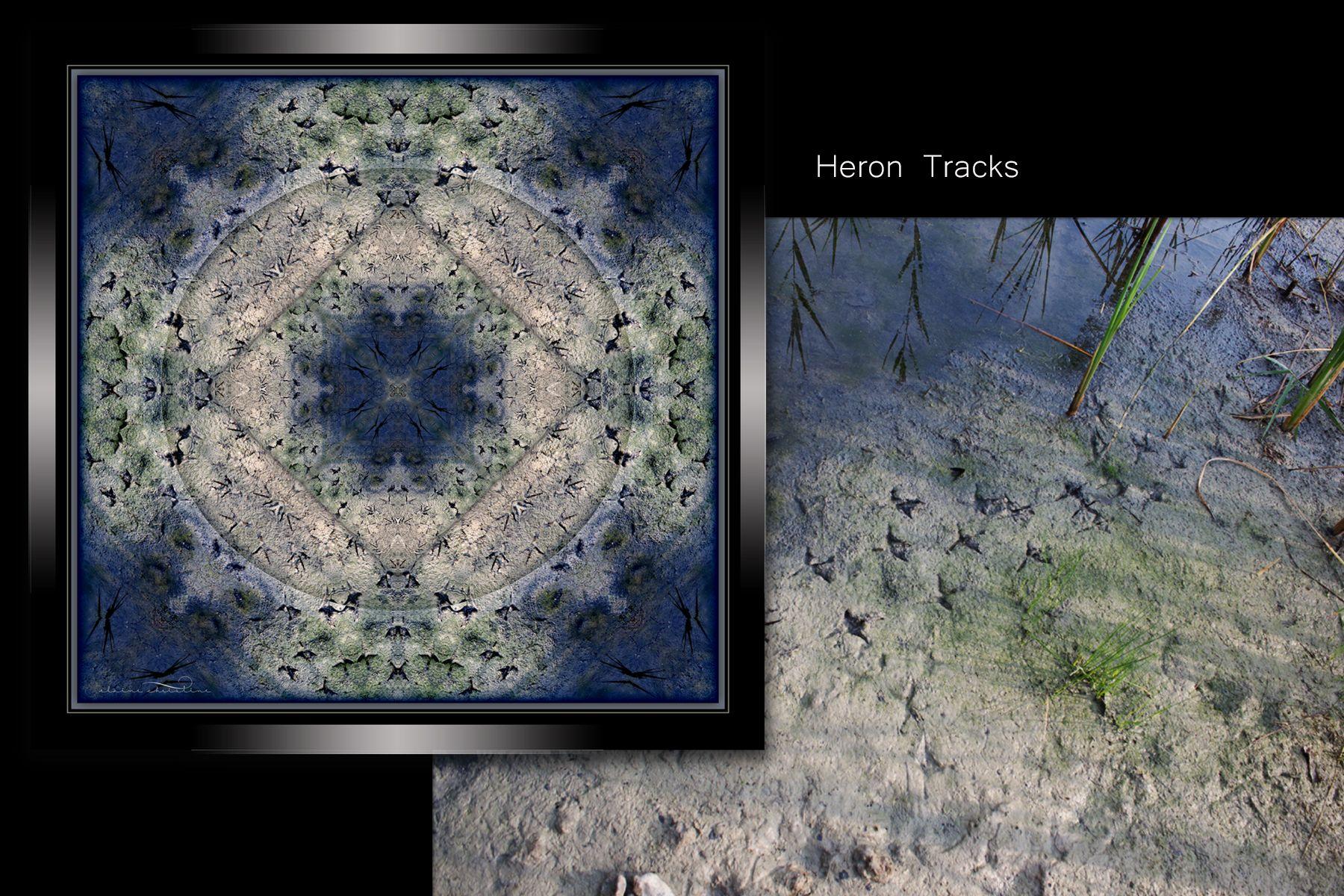 WebHeronTracks.jpg