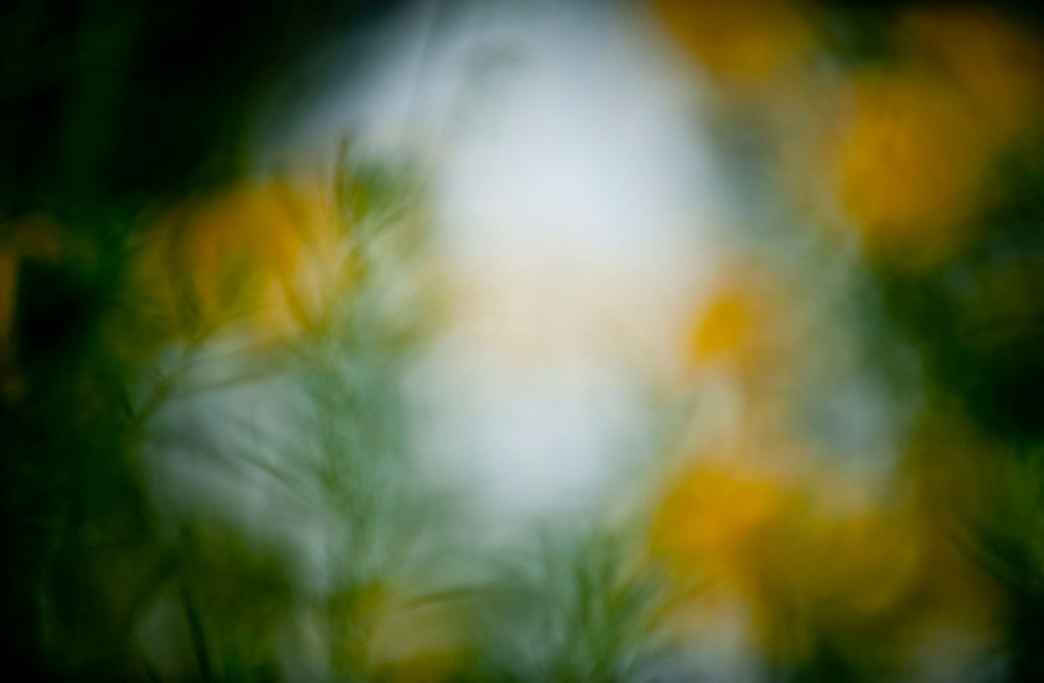 Abstract and Blurred: Yellow and Green Flowers