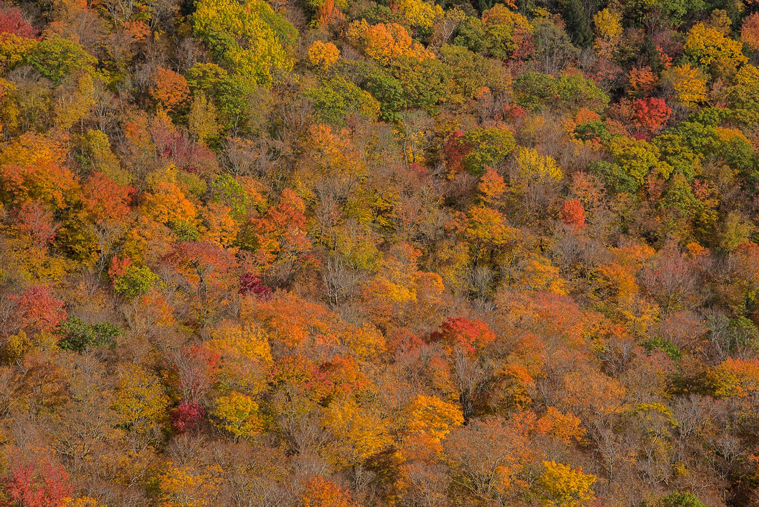 Fall Foliage in the NH White Mountains