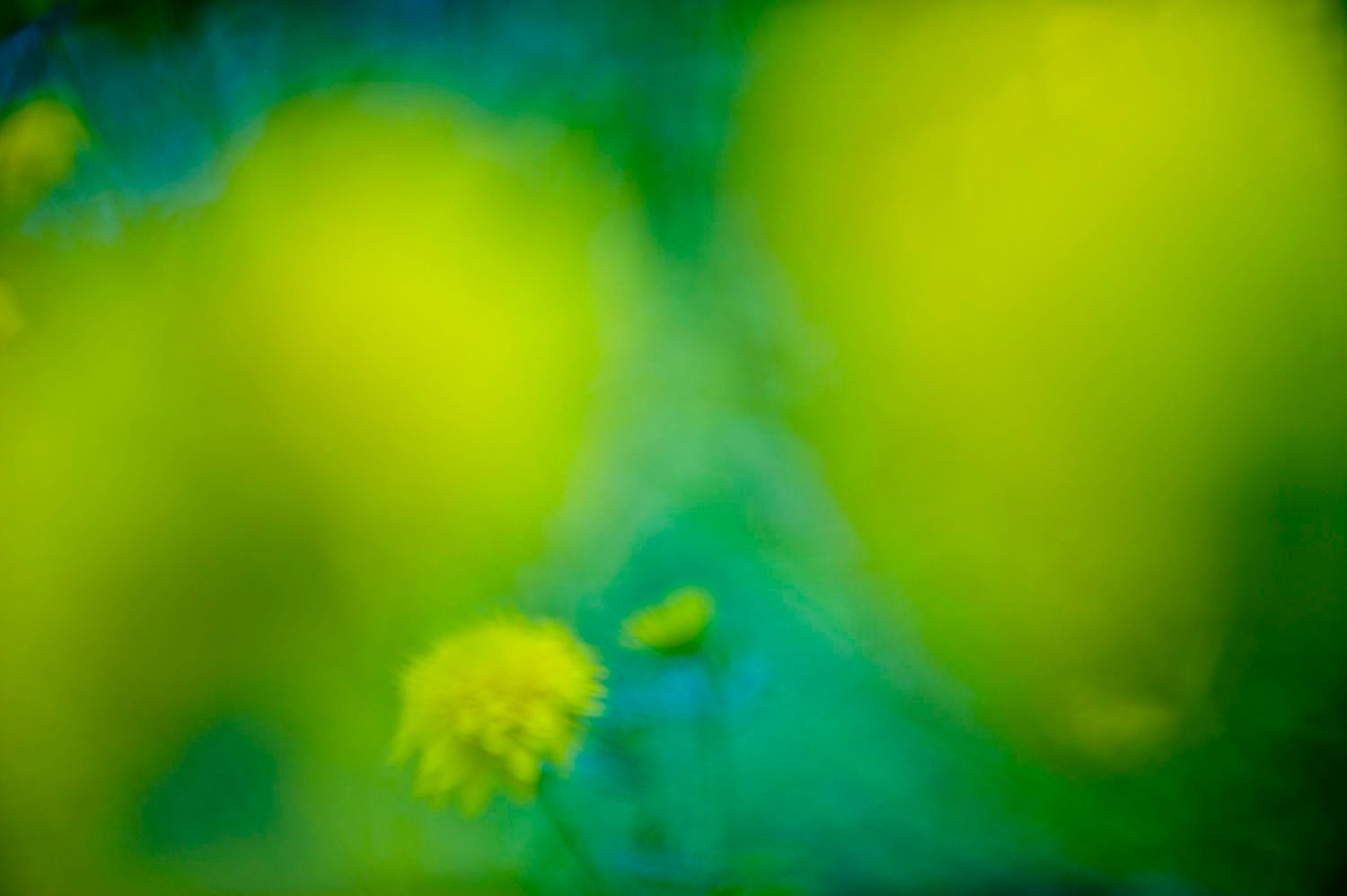 Abstract and Blurred: Yellow Flowers