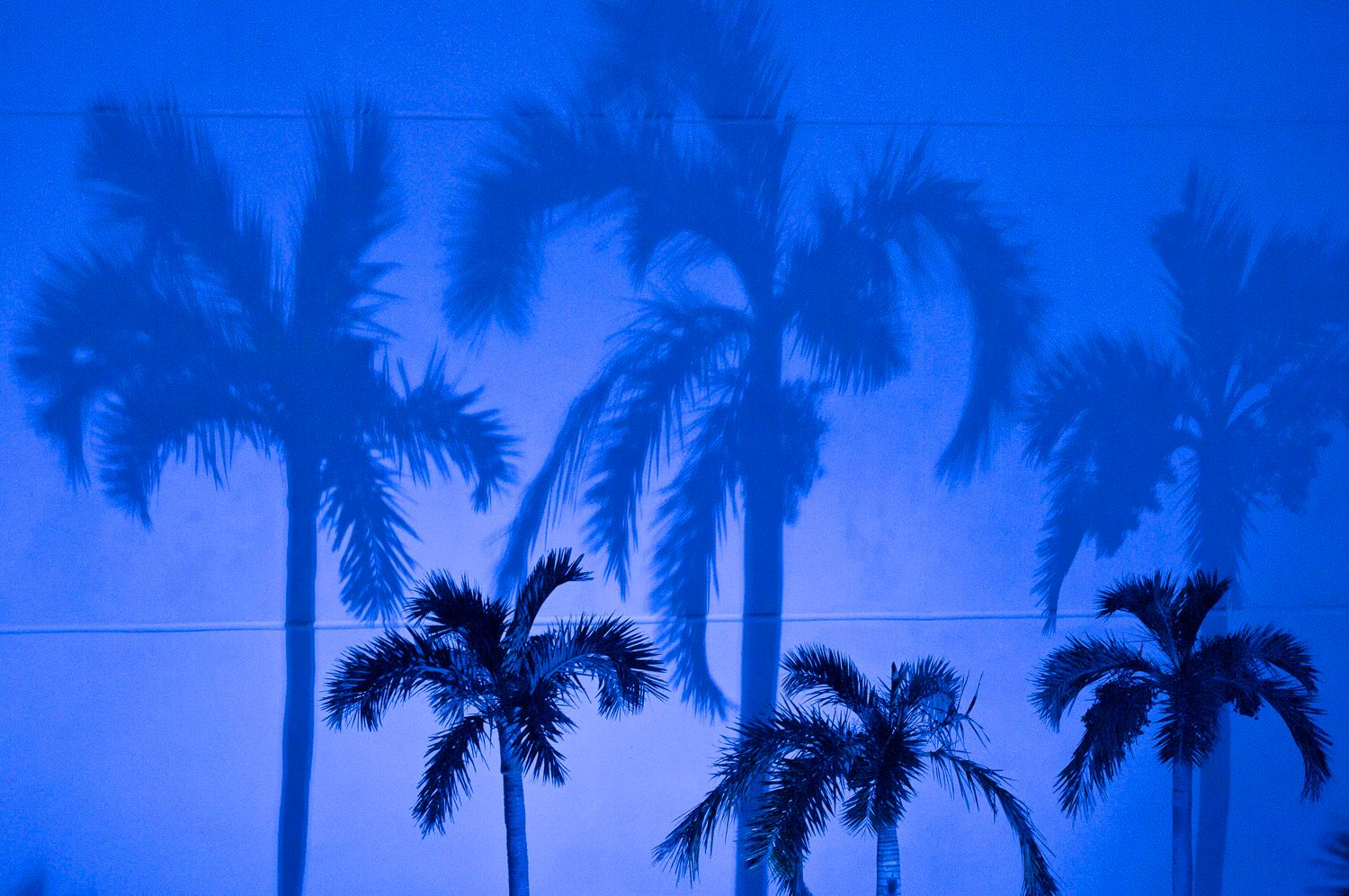 Blue Shadows of Palm Trees against wall