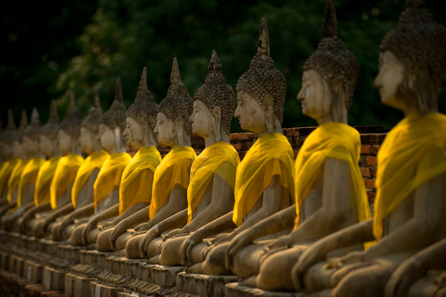 Row of Buddha Statues with Saffron Robes