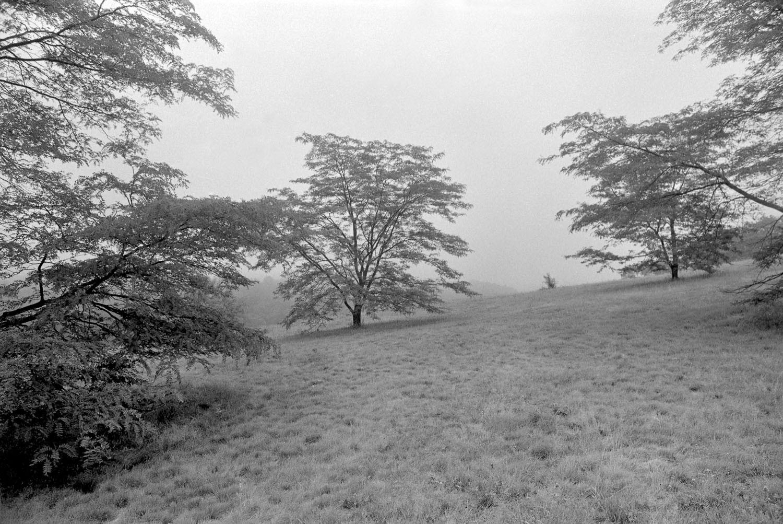 Arnold Arboretum Landscape, Boston, MA