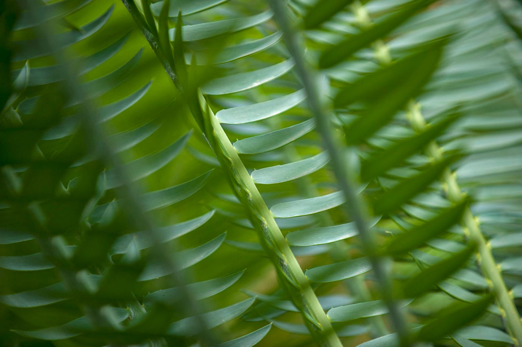 Abstract and Blurred: Fern