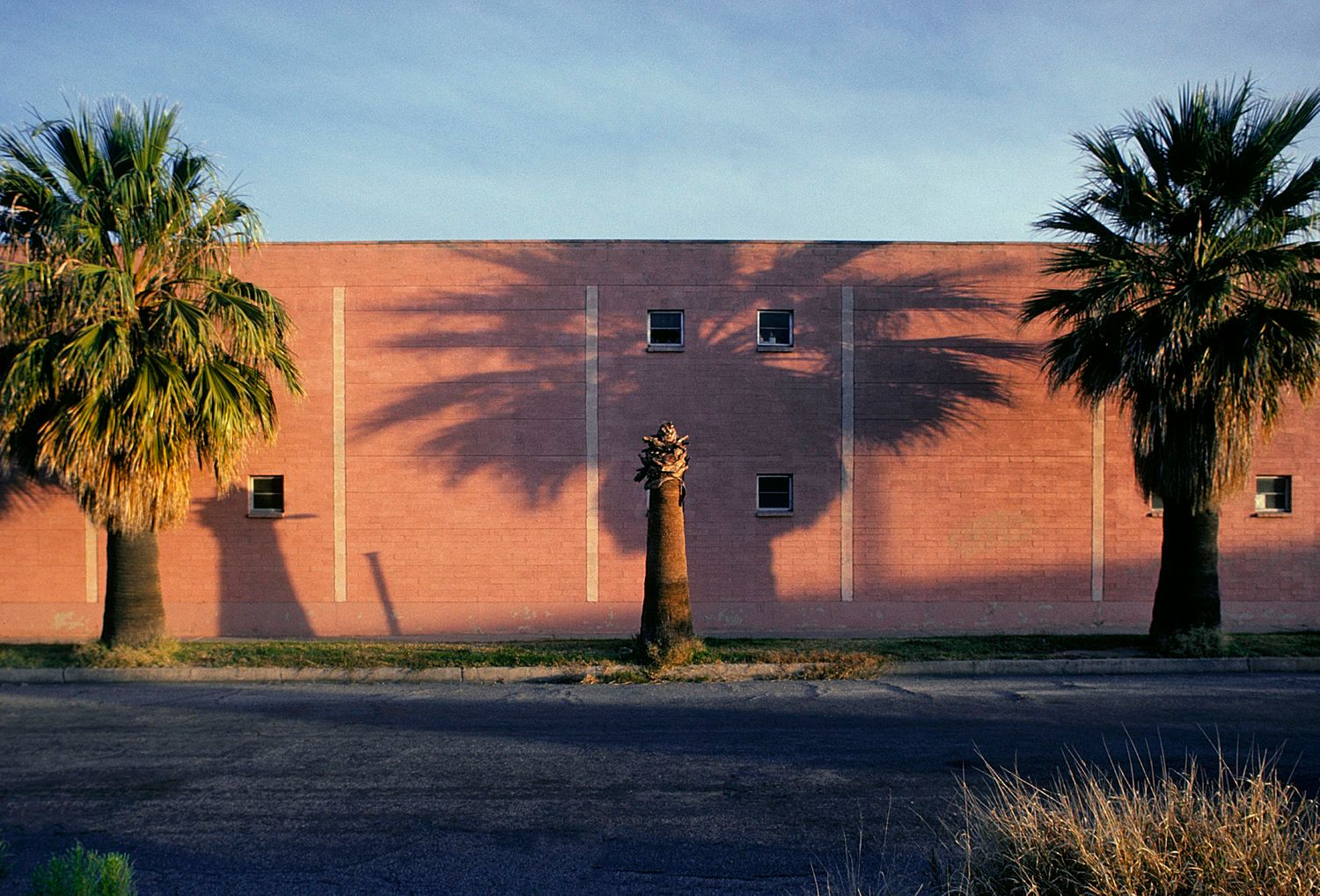 Palm Trees and Shadows