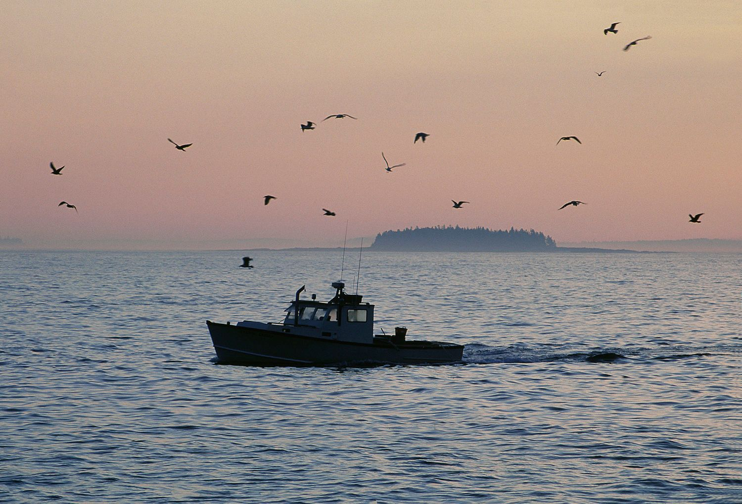 Lobster boat in Mascongus Bay, Maine