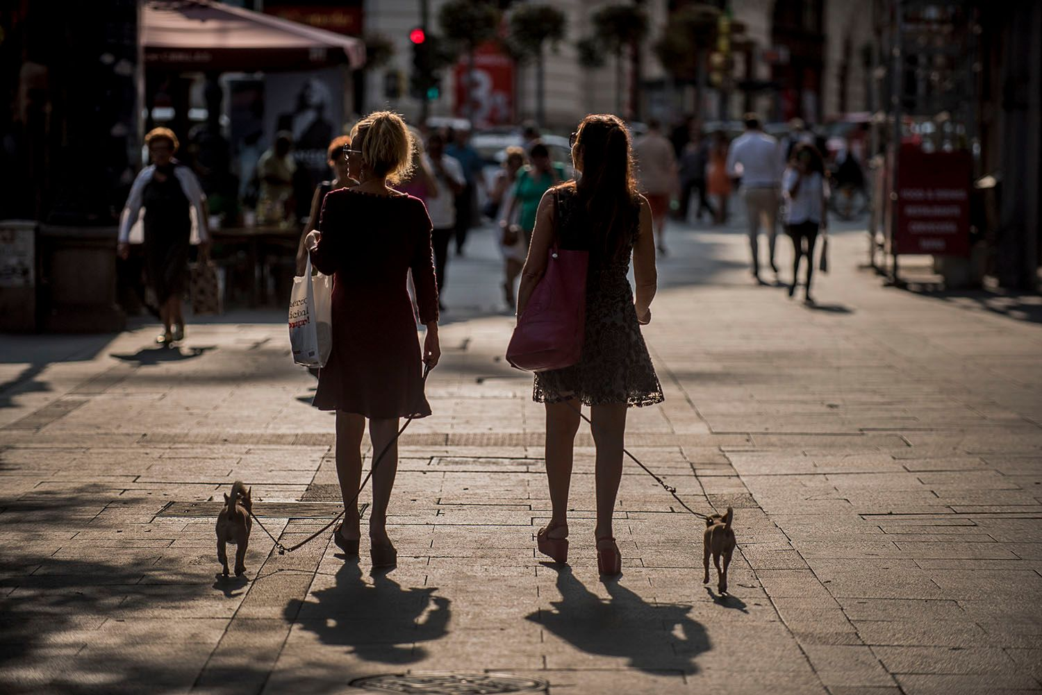 Women walking their dogs