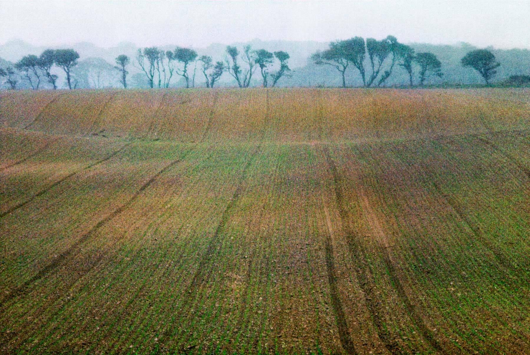 New Crop, East Anglia