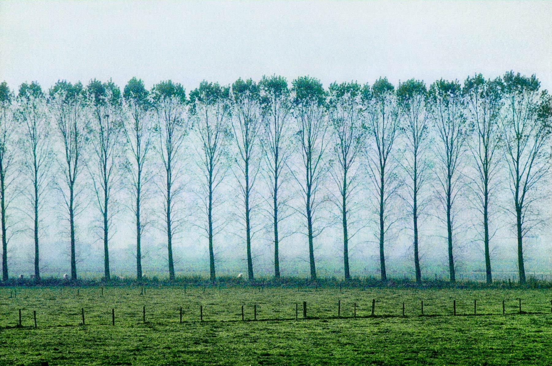 Windbreak, The Netherlands